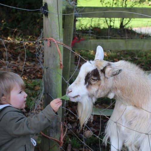 Meet our animals at Bampfield Farm Self-Catering Holiday Cottages in North Devon.
