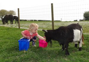 animal feeding children