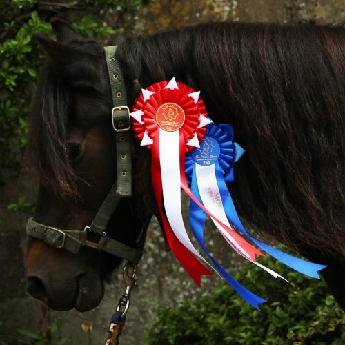 You can enjoy pony rides at Bampfield Farm Holiday Cottages in North Devon.
